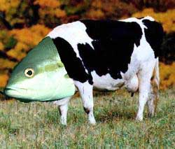 Fish and cow