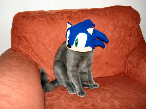 Or Sonic in a cat costume