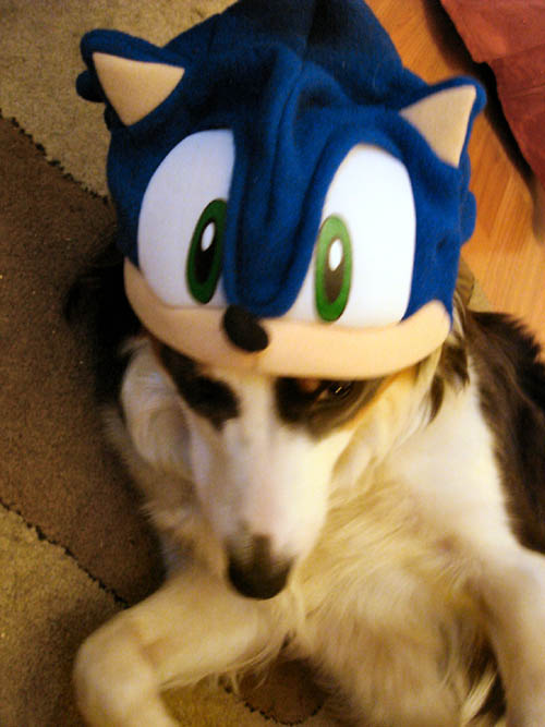 Really a dog in a Sonic hat